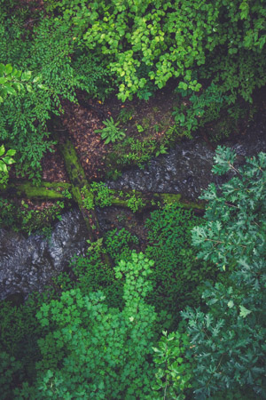 Forest From Above #183